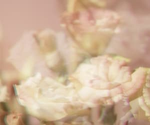 Dream, flower, and rose image