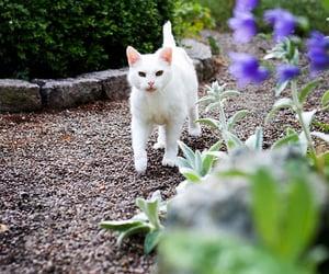 nature and white cat image