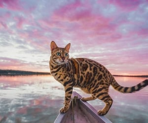 cat, animals, and clouds image