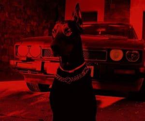 dog, black, and car image