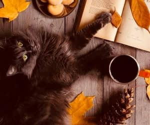 cat, autumn, and book image