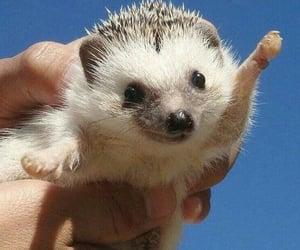 hedgehog, animal, and aesthetic image