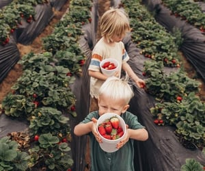 family and strawberry image