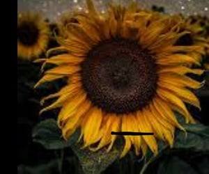 Image by sunflower🌈🌻