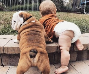 adorable, animals, and baby image