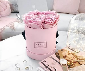 rose, pink, and pink roses image