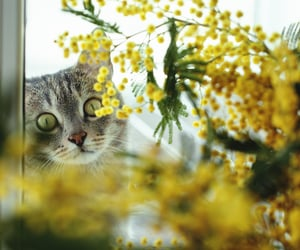 cats, kitties, and animals image