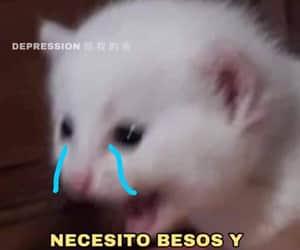 abrazo, Besos, and gatito image