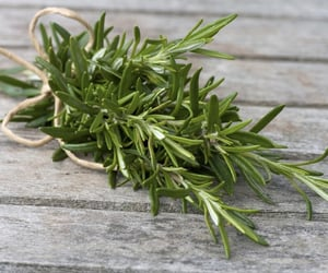 health, rosemary, and plant image