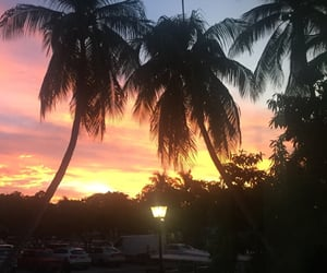 beautiful, summer, and palms image
