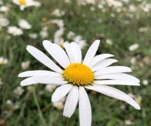 flowers, instagram, and hergreyshades image