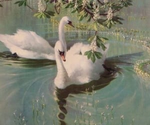 Swan, aesthetic, and nature image