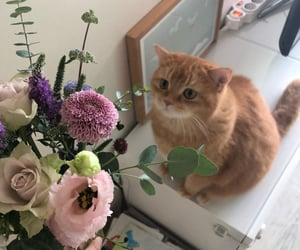 animals, cats, and pastel flowers image