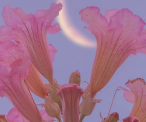 aesthetic, flowers, and moon image