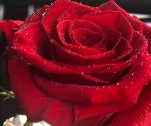 fleur, flower, and rose image