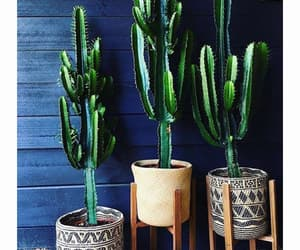 cactus, green, and ideas image
