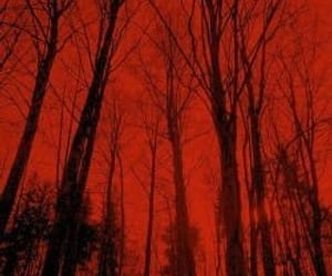 forest, red, and trees image