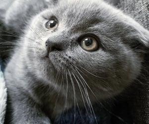 animals, cat eyes, and feline image