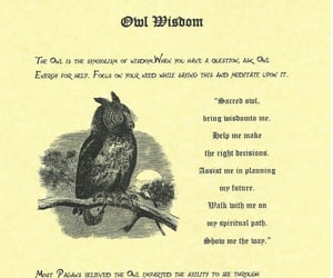 owl, spell, and wisdom image