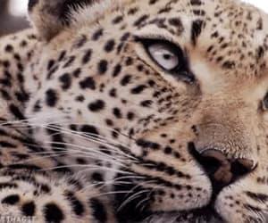 animal, animals, and gif image