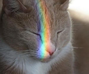 background, cat, and colours image