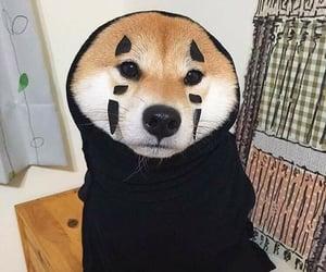 dog, cute, and kawaii image