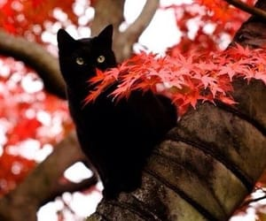 cat, autumn, and tree image