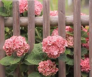 beautiful, flower, and gardening image