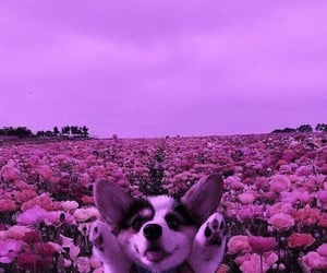 dog, animals, and flowers image