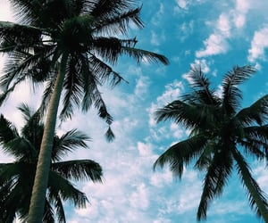beautiful and tropical image