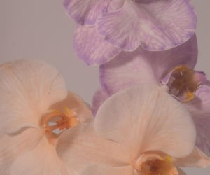 flowers, pale, and pastel image