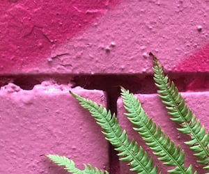 photography, pink, and wall image