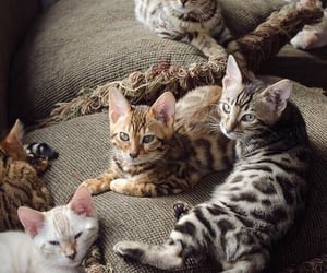 cats and kitty image