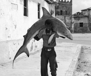 shark, b&w, and photography image