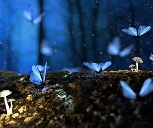 butterfly, blue, and mushroom image
