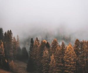 autumn, fog, and nature image