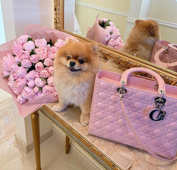 bags, dior, and dog image
