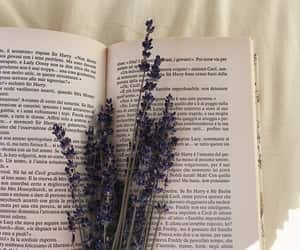 article, book, and bookworm image