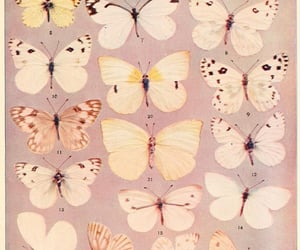 butterfly, pink, and archive image