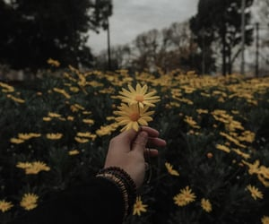 aesthetic, daisy, and wildflowers image