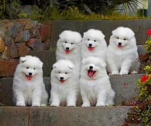 baby dogs, white dogs, and friends of people image