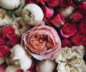 beautiful, happy, and elegance image