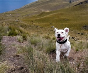 dogs, green, and nature image