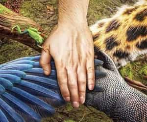 animals, habitat, and article image