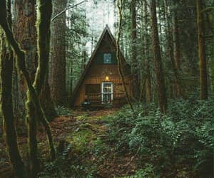 cabin, nature, and forest image