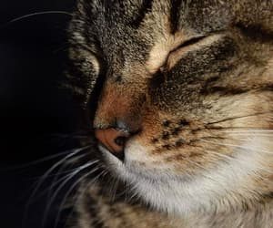 animal, animals, and calm image