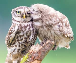 animals, birds, and in love image