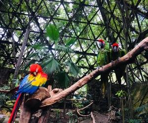 animals, zoo, and zoologico image