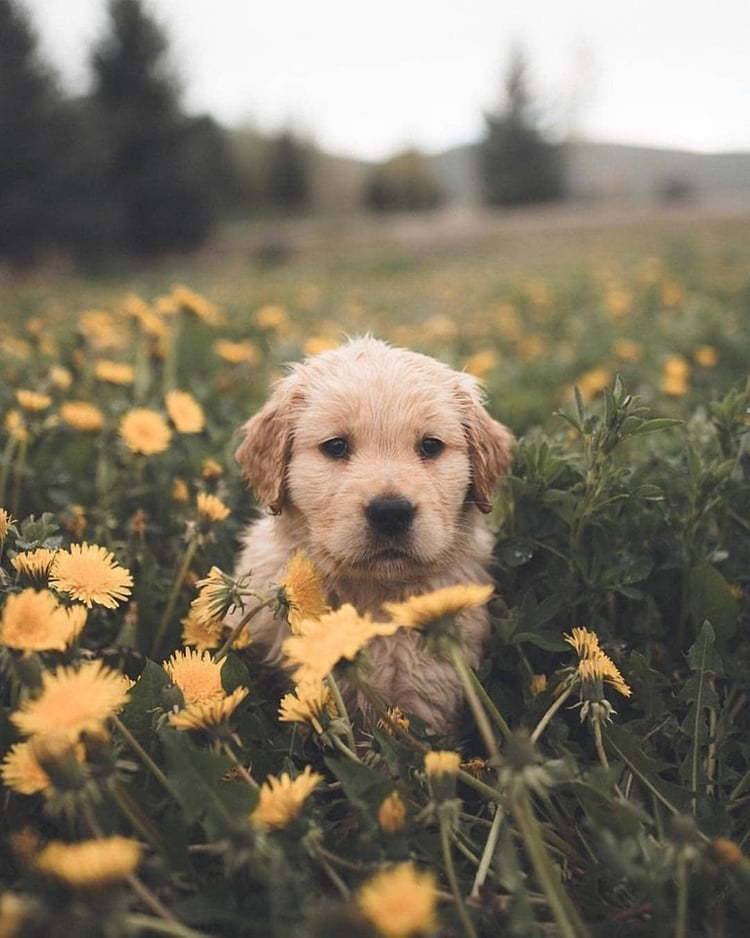 aesthetic, colour, and cute dog image