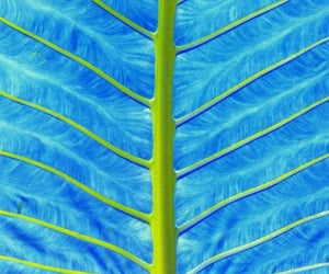 blue, detail, and veins image